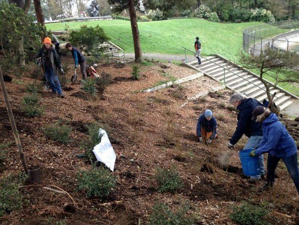 Peach_garden_planting