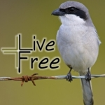 Live_free_audio_badge_half