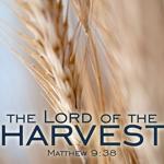 Harvest_half