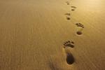 Footprints_sand_half