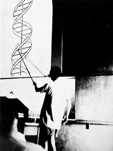 Watson presenting the double helix at the 1953 CSH Symposium. (Photo: James D. Watson Collection, Cold Spring Harbor Laboratory Archives.)