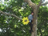 Jessica 'Sunflower' Rechtschaffer Climbs Tree in City Hall Park Protest, Plucked by Police