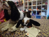 UWS Boutique's Dog Inspires Stuffed Animal