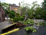 Storm Knocks Down 77-Year-Old Tree