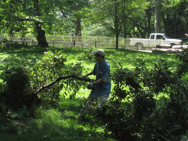 CP Worker Hauls Away Tree Debris