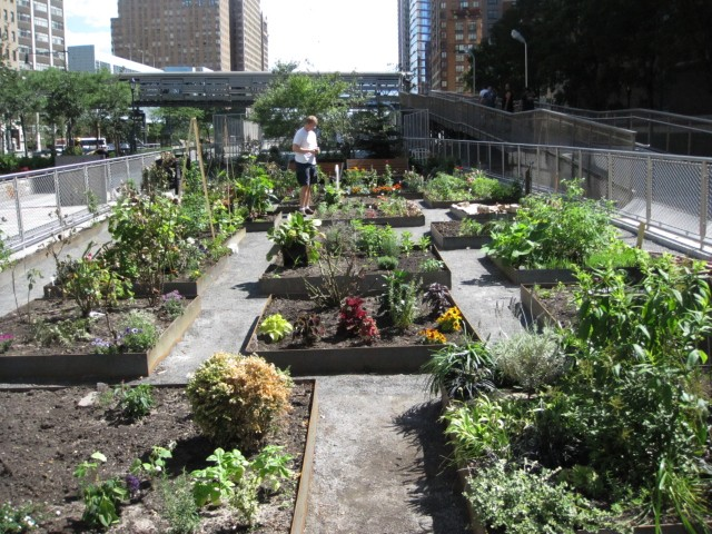 The community gardens, which have been transplanted several times, appeared to be thriving in their new location in the park.