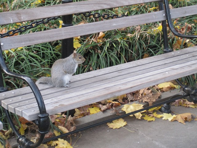 Greenwich Village Squirrel at Park