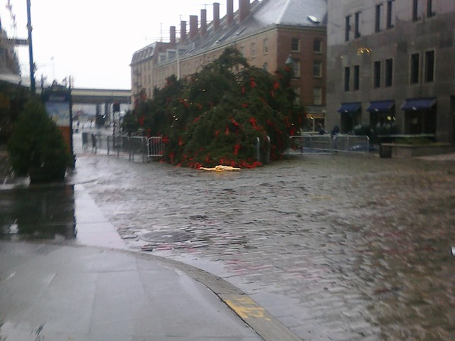 The tree fell on Fulton Street near a Guess department store.
