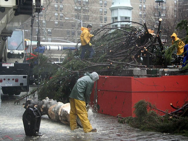 A worker starts to cut the base of the tree into pieces.
