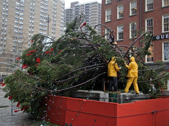 Workers struggle in the heavy winds to secure the tree.
