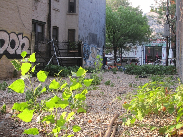 A view from the rear of the vacant lot looking toward East First Street.