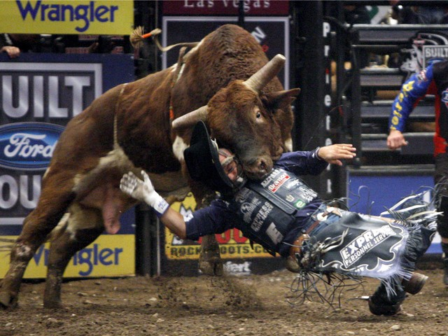 Jared Farley of Kempsey, Australia, is thrown to the ground after riding for a full eight seconds on the bull Big Bend during the first round of the Professional Bull Riders Versus Invite at Madison Square Garden on Jan. 4, 2008.
