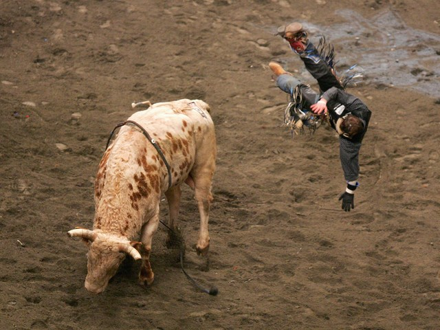 Kasey Hayes gets thrown from his bull during the Versus Invitational Professional Bull Riding (PBR) Tournament on Jan. 7, 2007 at Madison Square Garden.