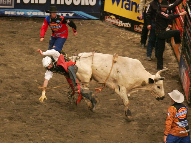 Sean Willingham is thrown from a bull during the Versus Invitational Professional Bull Riding (PBR) Tournament on Jan. 7, 2007 at Madison Square Garden.