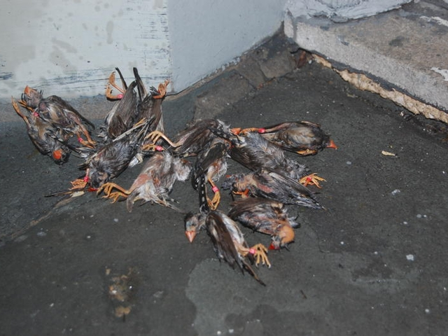 Dead zebra finches that sources sent DNAinfo purported to have been found in or around Gramercy Park on Sunday.