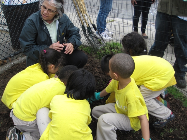 NYCHA commissioner Margarita Lopez helps the Dream Charter School kids plant wildflower seeds.