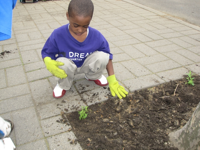 Kids from Harlem RBI's Dream Charter School planted flowers in the Parks Department playground next to their school.