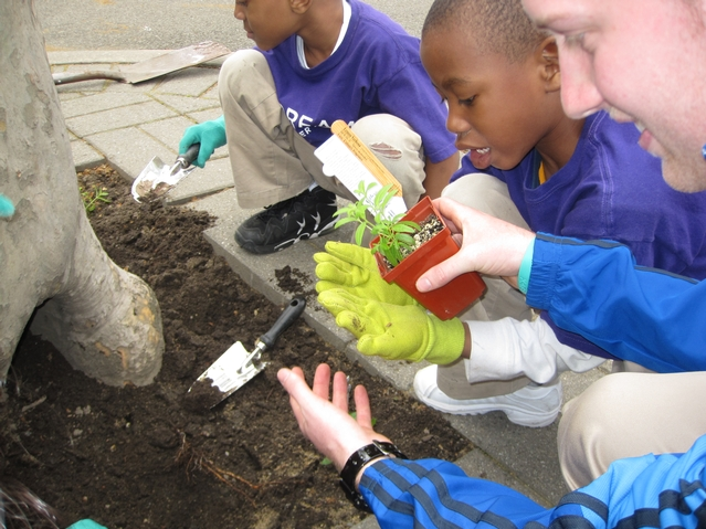 Kids from Harlem RBI's Dream Charter School planting flowers in the playground.