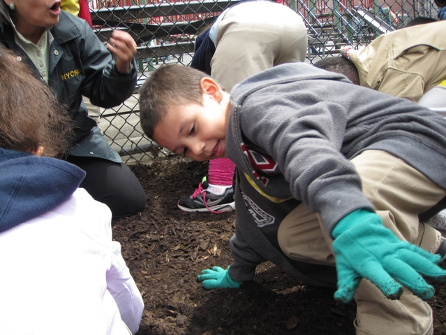 Harlem RBI's Dream Charter School planted flowers on Arbor Day.