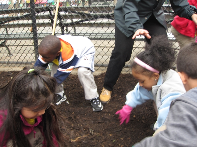 Kids from Harlem RBI's Dream Charter School planting wildflowers.