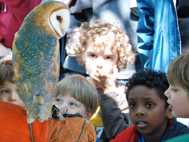 Raptors and animals of prey will be on display at the second annual Urban Wildlife Appreciation day.
