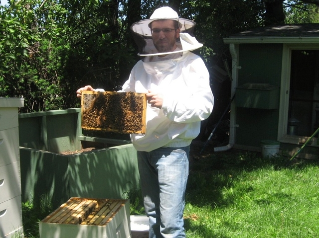 Elie Miodownik poses with the bees he gathered from a Little Italy mailbox in his backyard beekeeping operation in Queens.