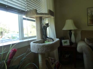 Cat townhouse