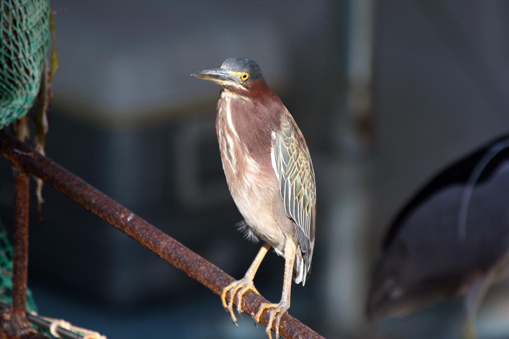 Florida Bird