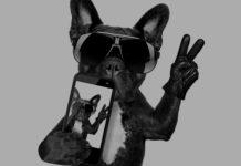 Dog taking a selfie