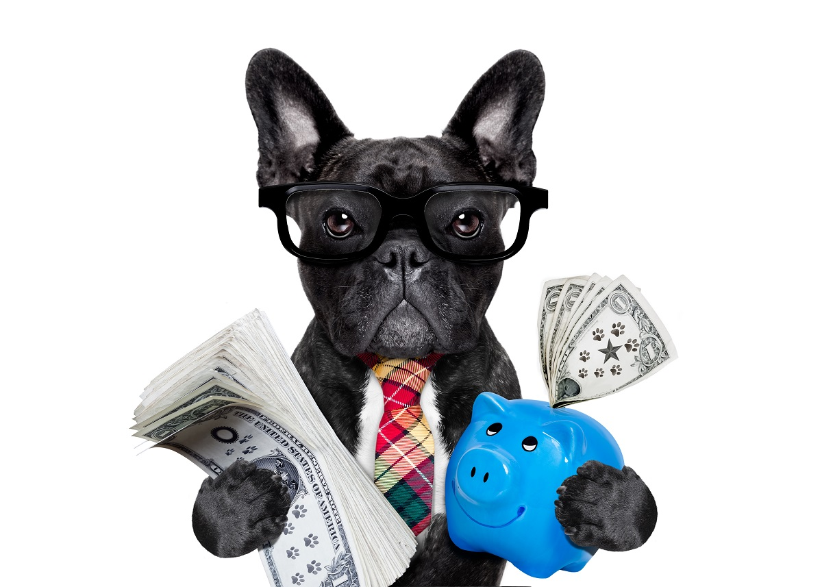 French bull dog investor