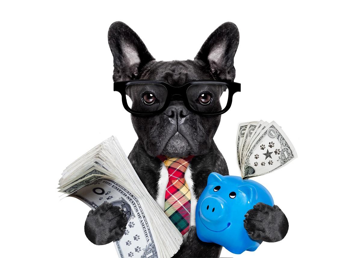 French bull dog investor