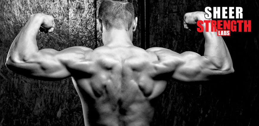 The 5 Best Exercises to Build Trap Muscles - Sheer Strength Labs