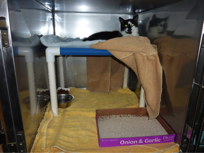 Cat cage with elevated bed is less cramped