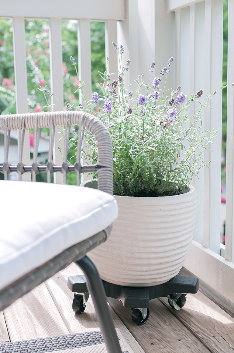 small balcony plants lavender in white pot on plant roller down under