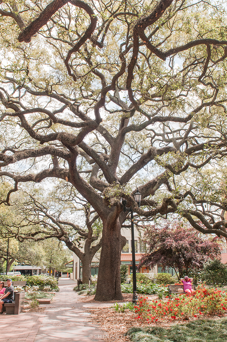 reynolds square savannah georgia visit