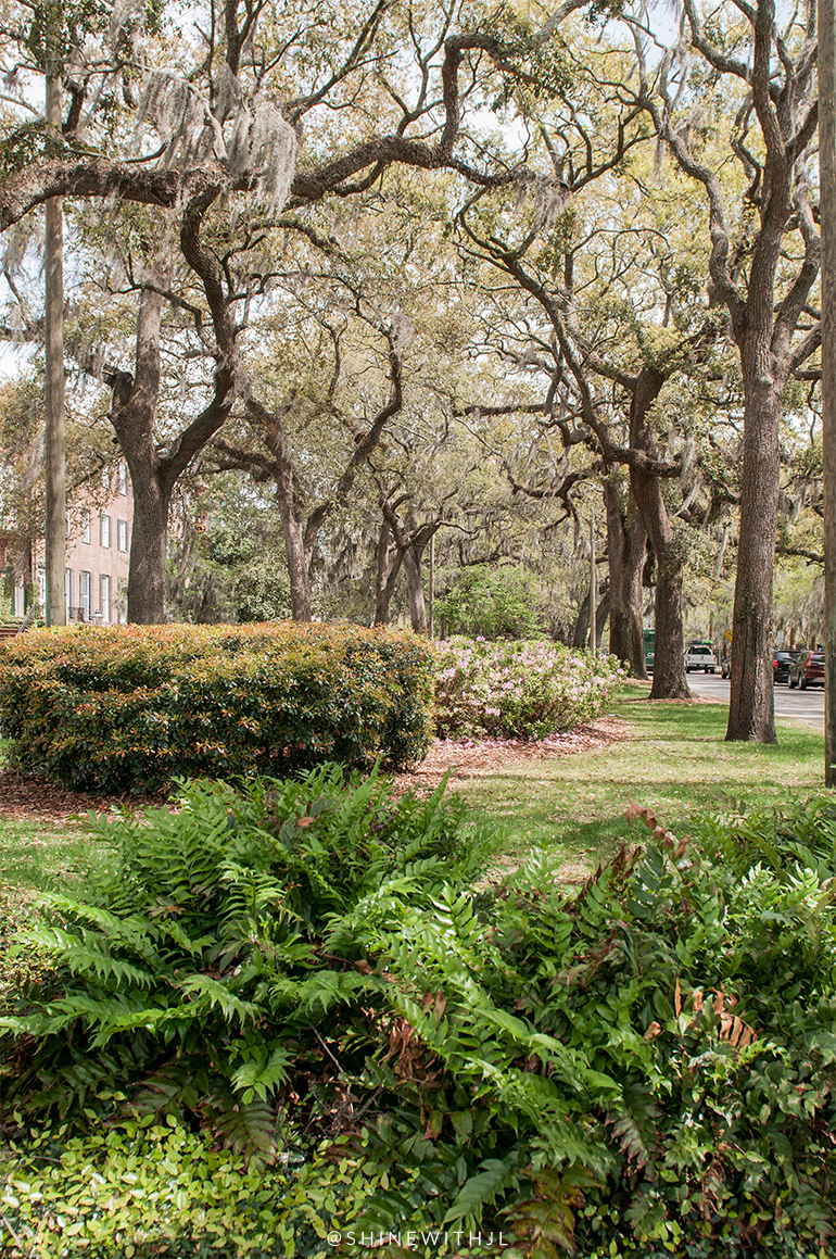 tree lined park historic district savannah vacation