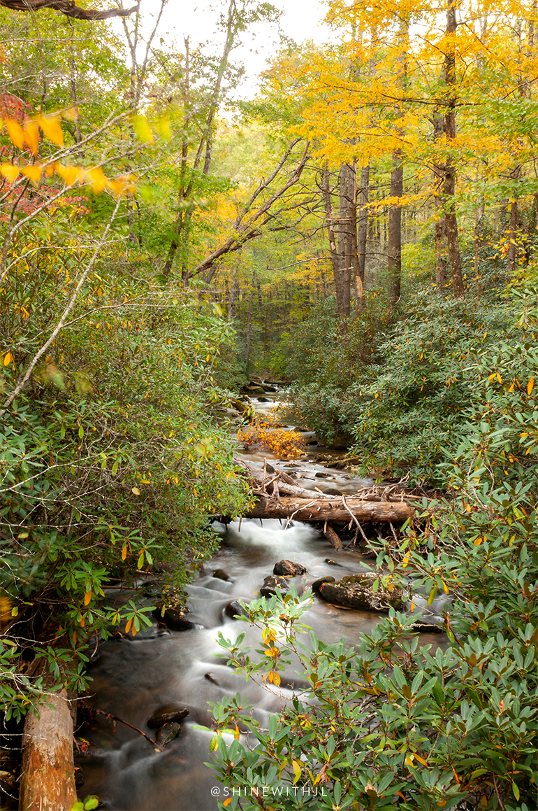moving waterfall with fallen trees fall foliage