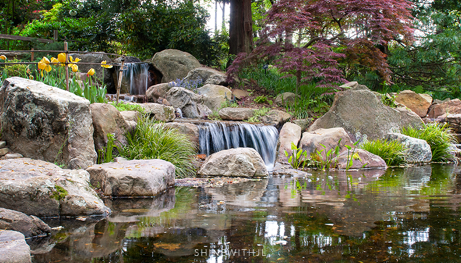 Things To Do In Charlotte: UNC Botanical Gardens