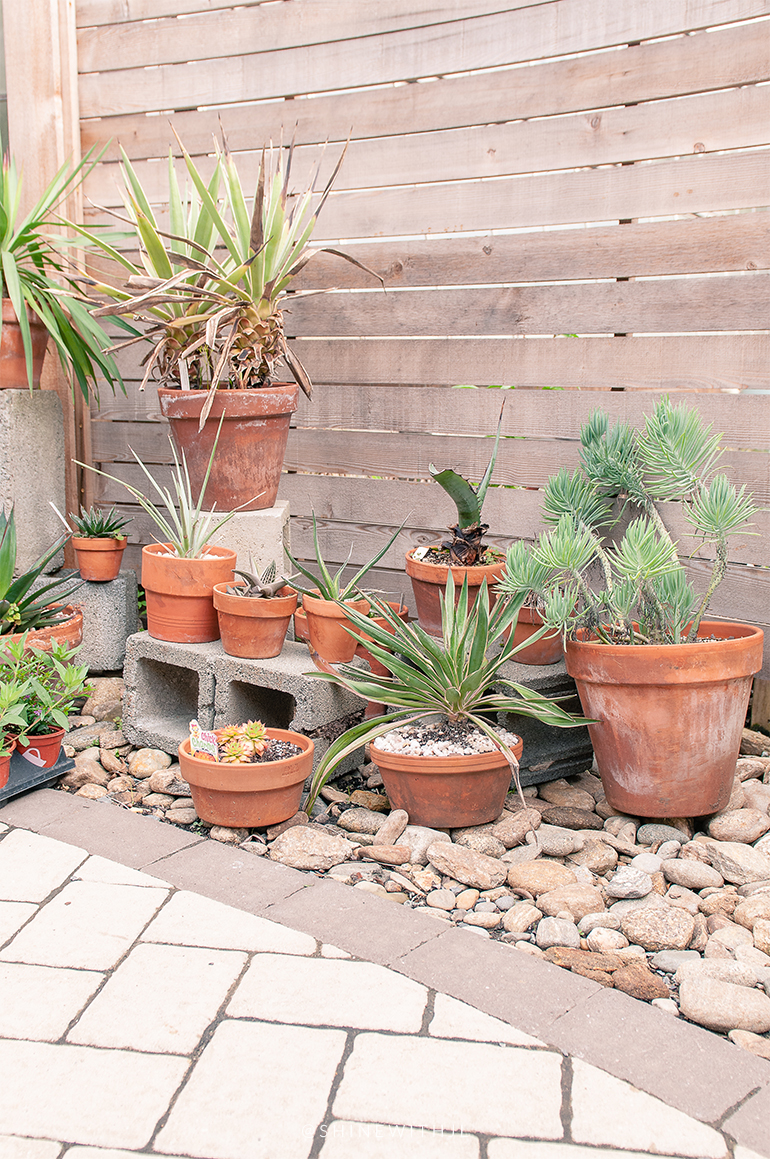 succulents in clay pots outdoor patio design