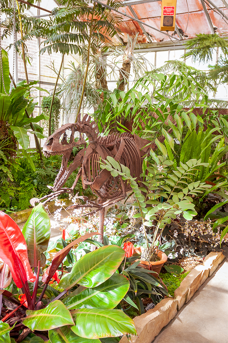 dinosaur tropical plants greenhouse