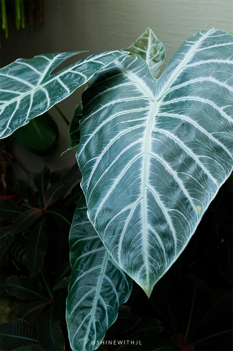 moody botanicals