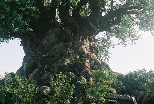 tree of life disney photo
