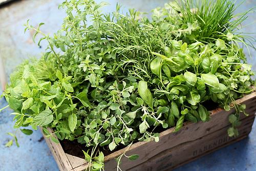 herb photo