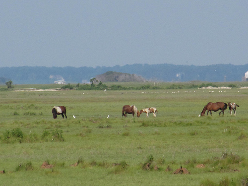 Assateague Island photo