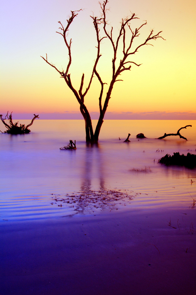 Hunting Island photo