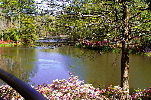 Callaway Gardens photo