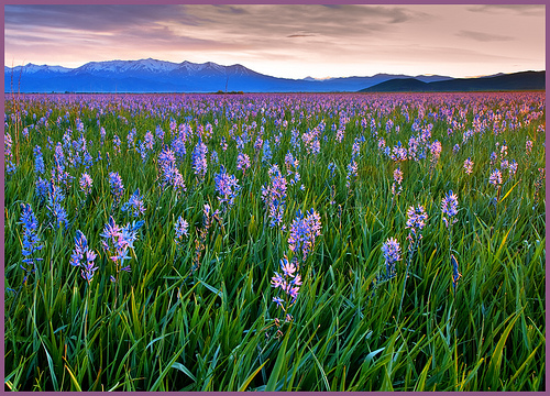 Camas Prairie Centennial Park photo