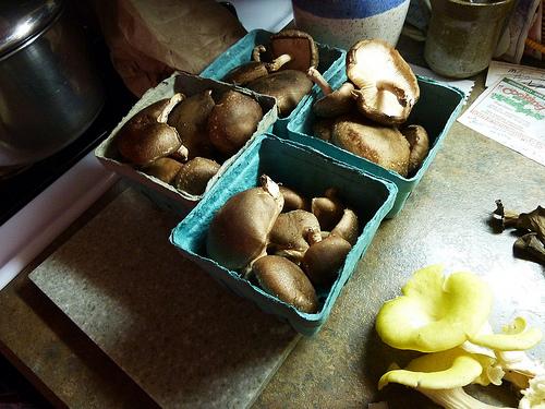 mushrooms in container photo