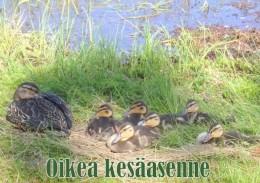 KesC3A4asenne20180716.JPG