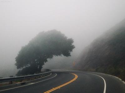 road, turn, asphalt, mountain, fog, mist, foggy, weather, tree